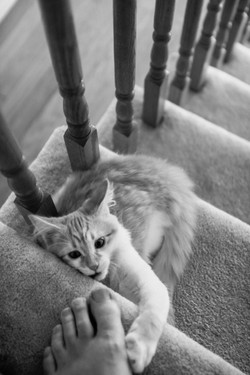 Chilly on the stairs