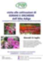 Alto Adige fiori.jpg