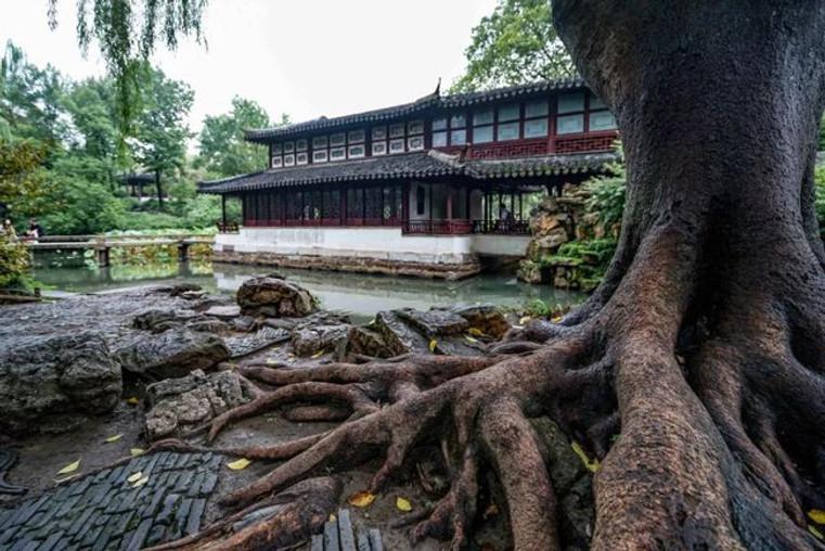 Jianshanlou (the King Li Xiucheng's Office) and ancient tree of Humble Administrator's Garden