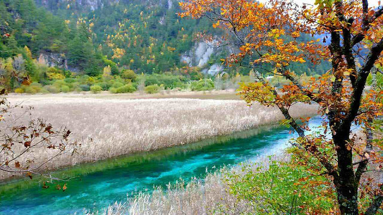 Stunning Lake and Beautiful Plants in the Jiuzhaigou Valley Scenic and Historic Interest Area