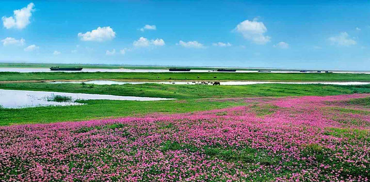 Nature Reserve of Poyang Lake, Photo from Official Site of Poyanghu National Wetland Park.