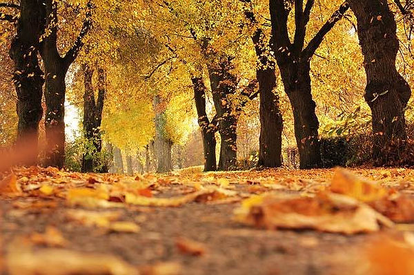 falling leaves and trees