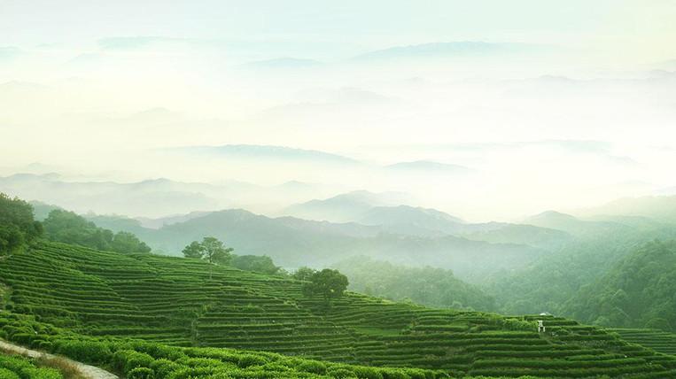 Longjing Tea Villiage Next to West Lake