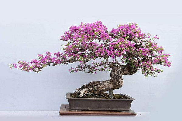 Chinese Potted Landscape