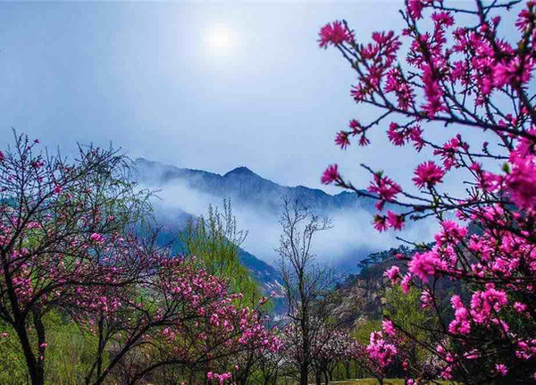 Peach Blossom Valley of Mount Tai
