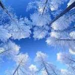 Frost White — Shuang Se (霜色)
