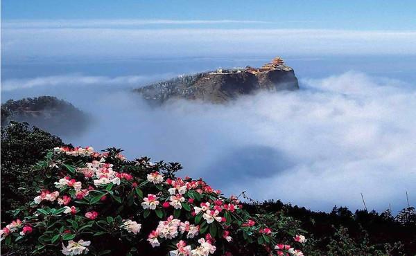 Beautiful Flowers on Leidongping of Mount Emei.