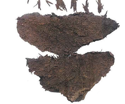 Extant Earliest Tea Leaf, Unearthed from the Mausoleum of Emperor Jing of Han (188 BC — 141 BC)