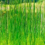 Scallion Green — Cong Lv (葱绿)