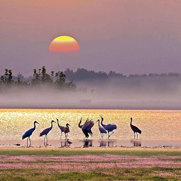 Cranes on Poyang Lake