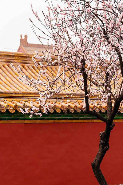 Red Wall and Yellow Roof of the Forbidden City