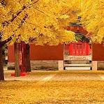 Autumn Fragrance — Qiu Xiang (秋香)