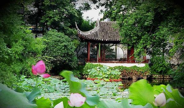Lotus Surrounding Furong Xie (Lotus Pavillon) of Humble Administrator's Garden, Photo from Official Site of Zhuozheng Garden.