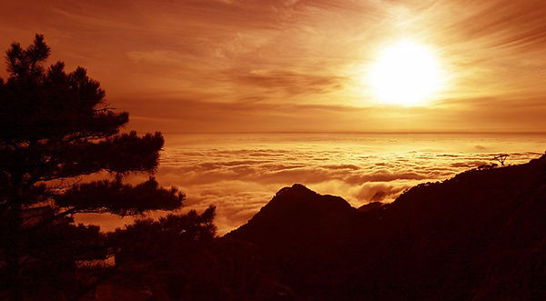 Trees and Cloud Sea on Top of the Mount Tai