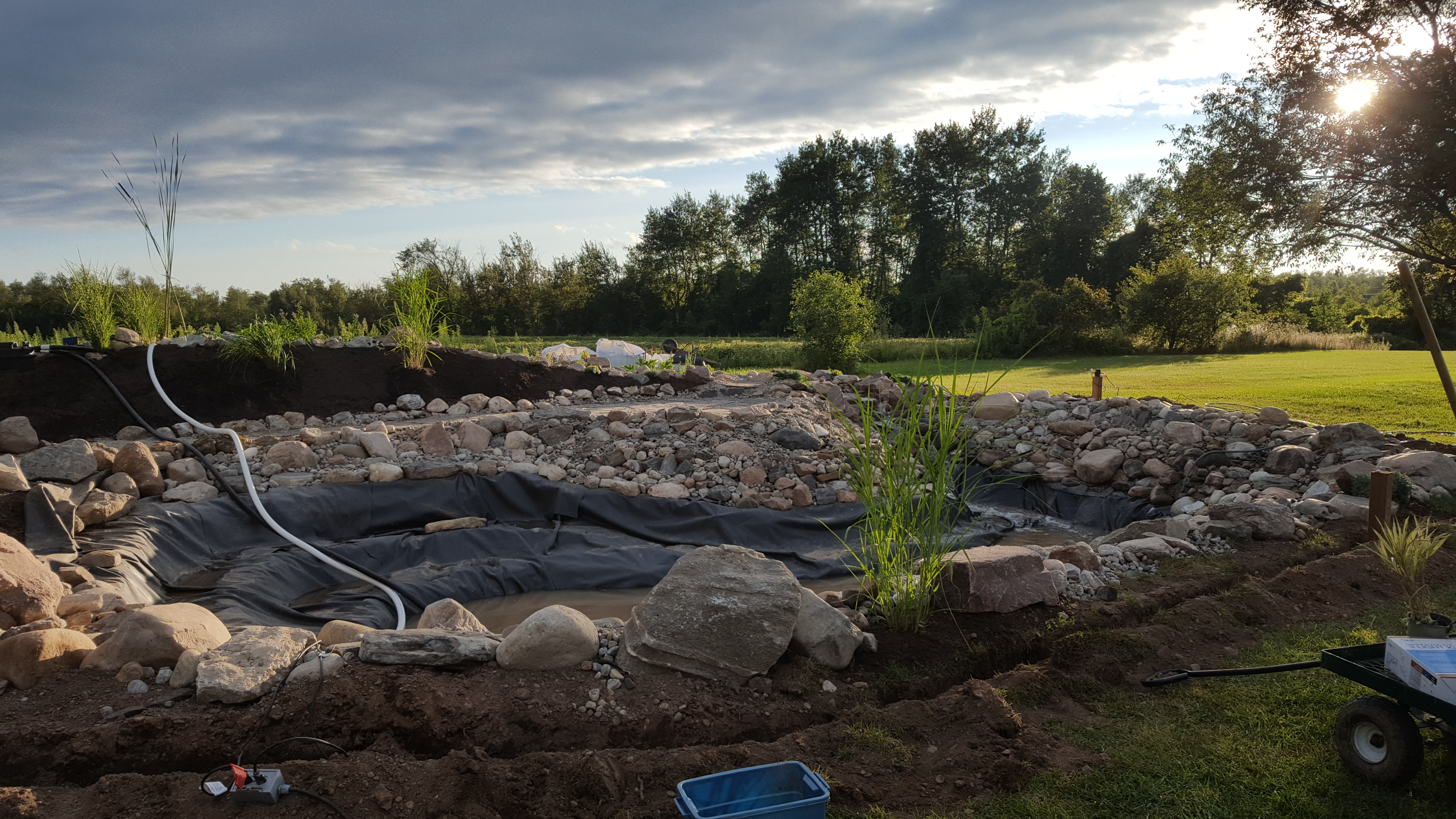 Swim Pond - Plantings