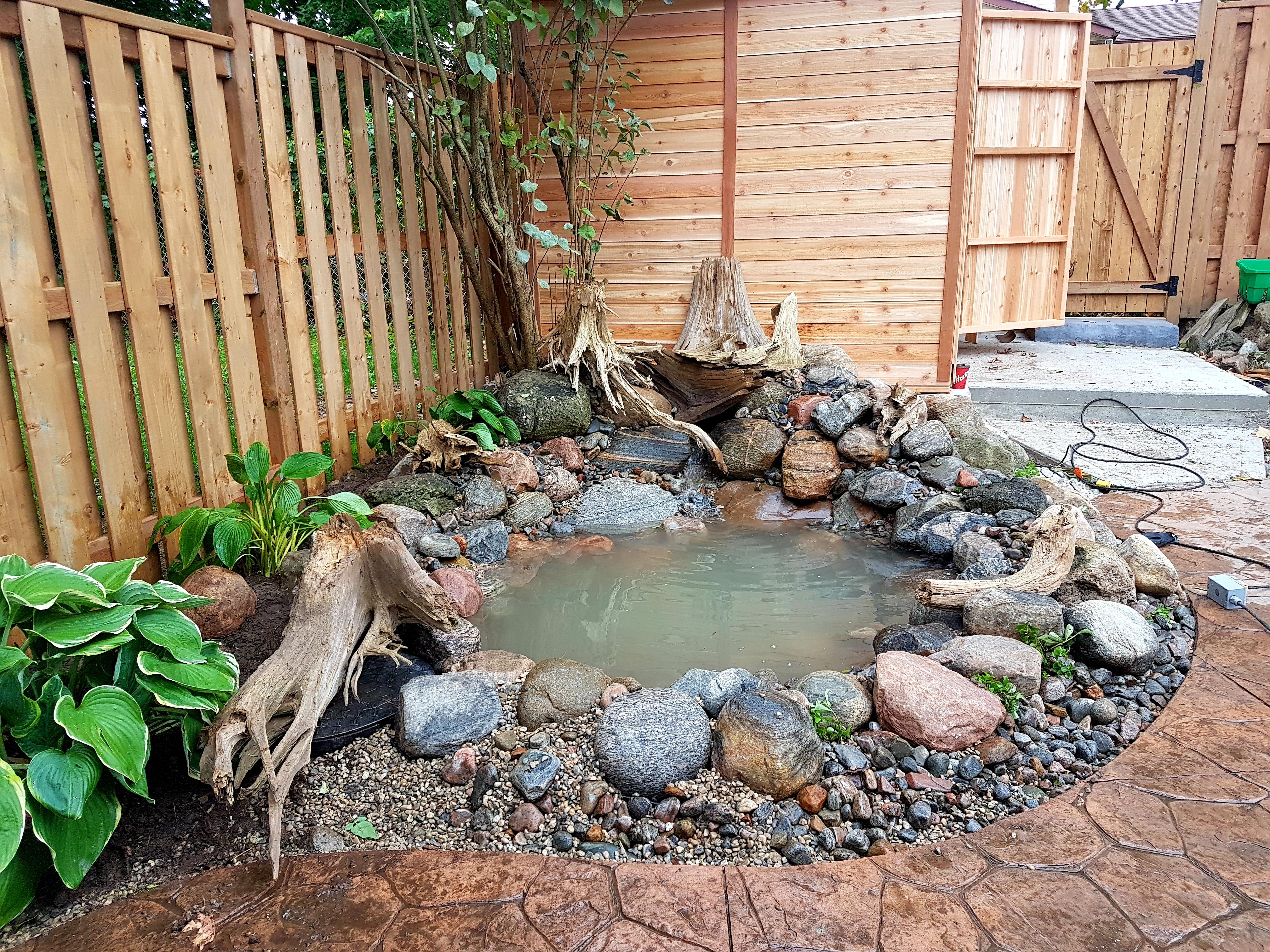 Jaqueline's mini pond