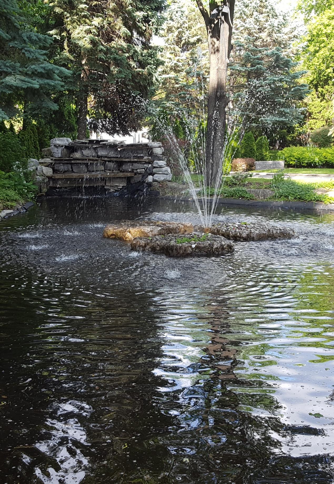 Bog pond - main pond