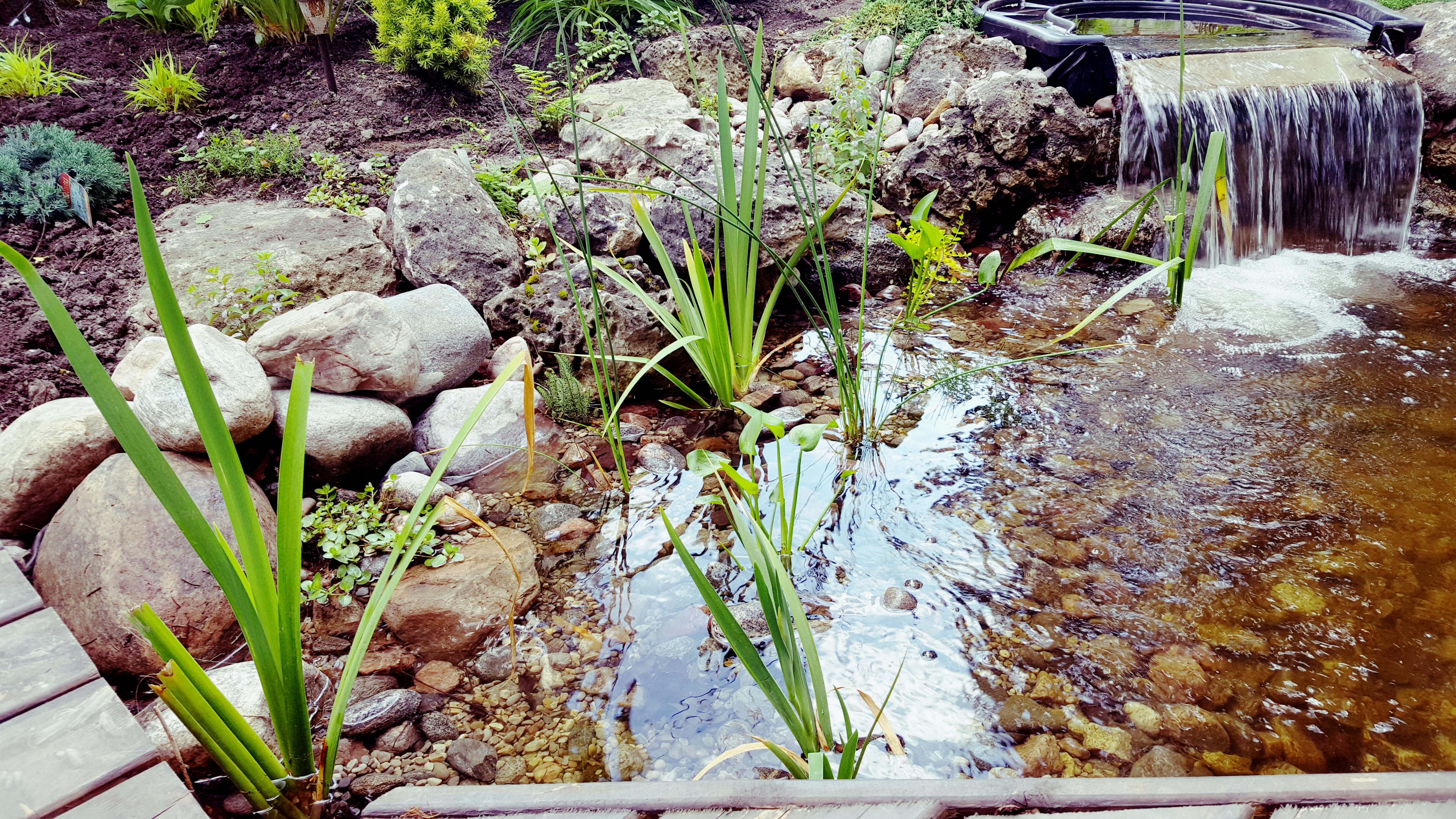 Bog pond - Upper bog garden