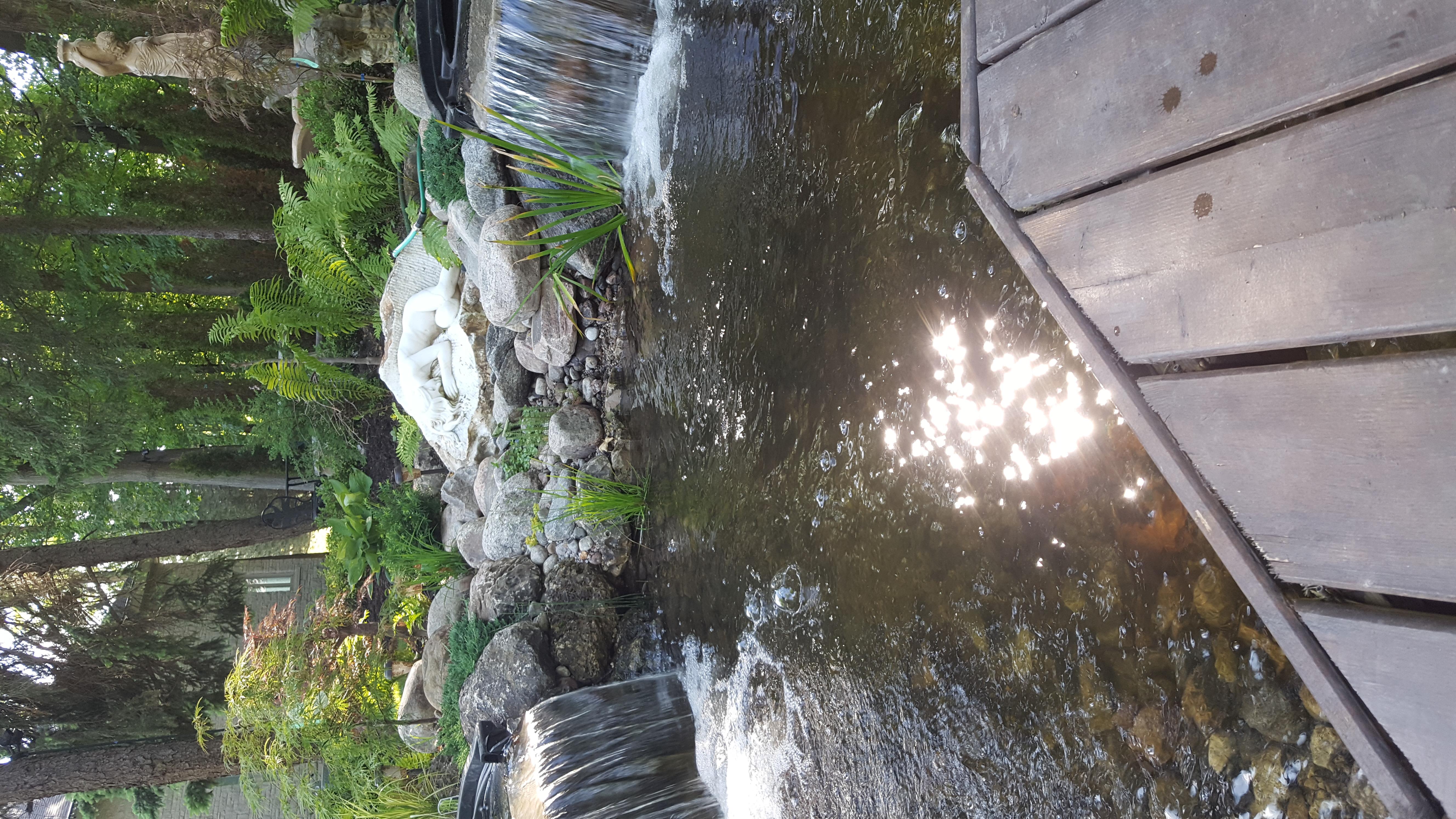 Bog pond - 26000 gph