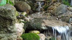Moss in Stream
