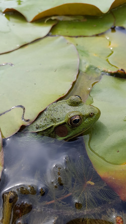 Amphibians and reptiles galore