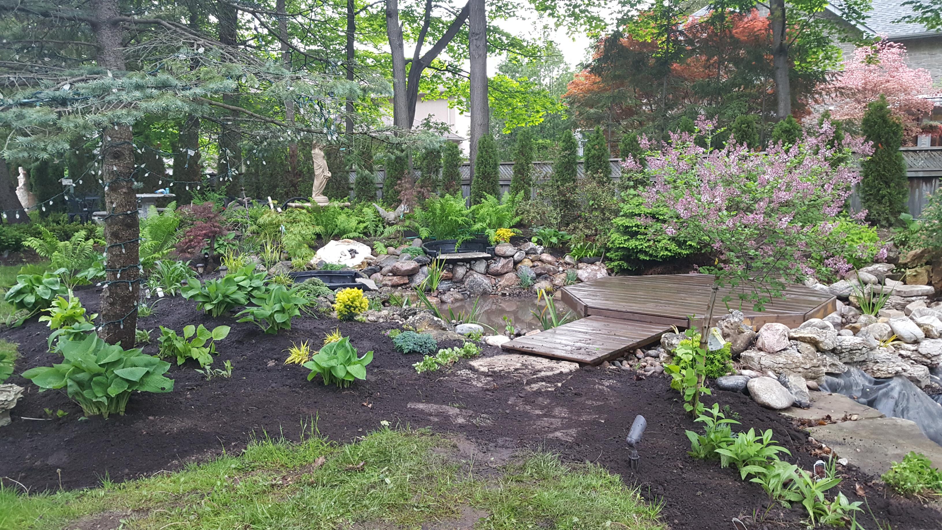 Bog pond - garden sanctuary