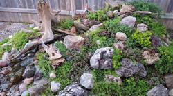 Sedums and neat rocks