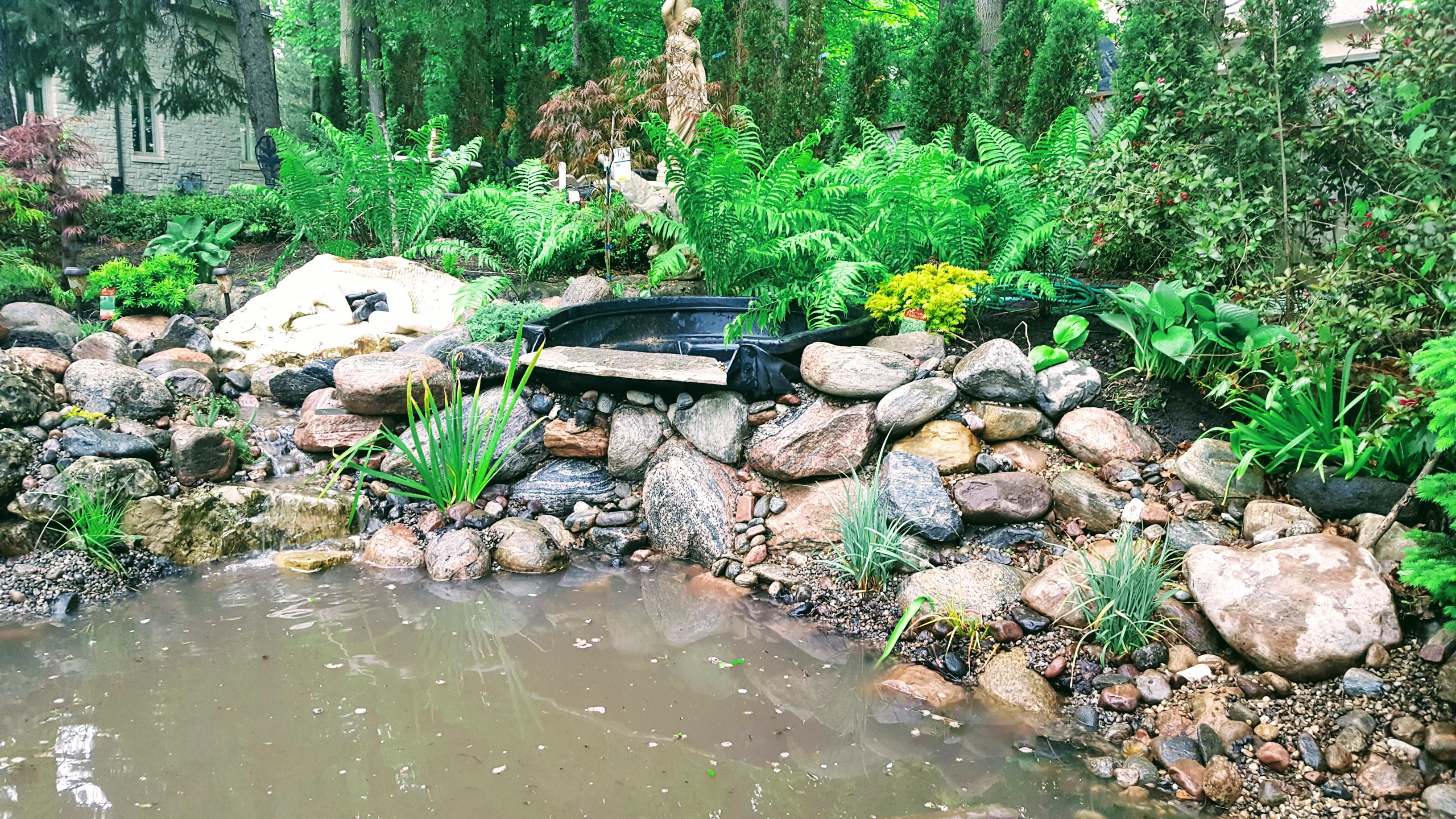 Bog pond - Plantings