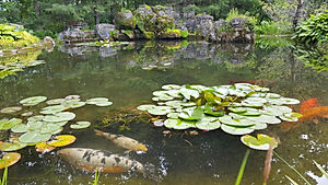 spring and fall pond cleaning