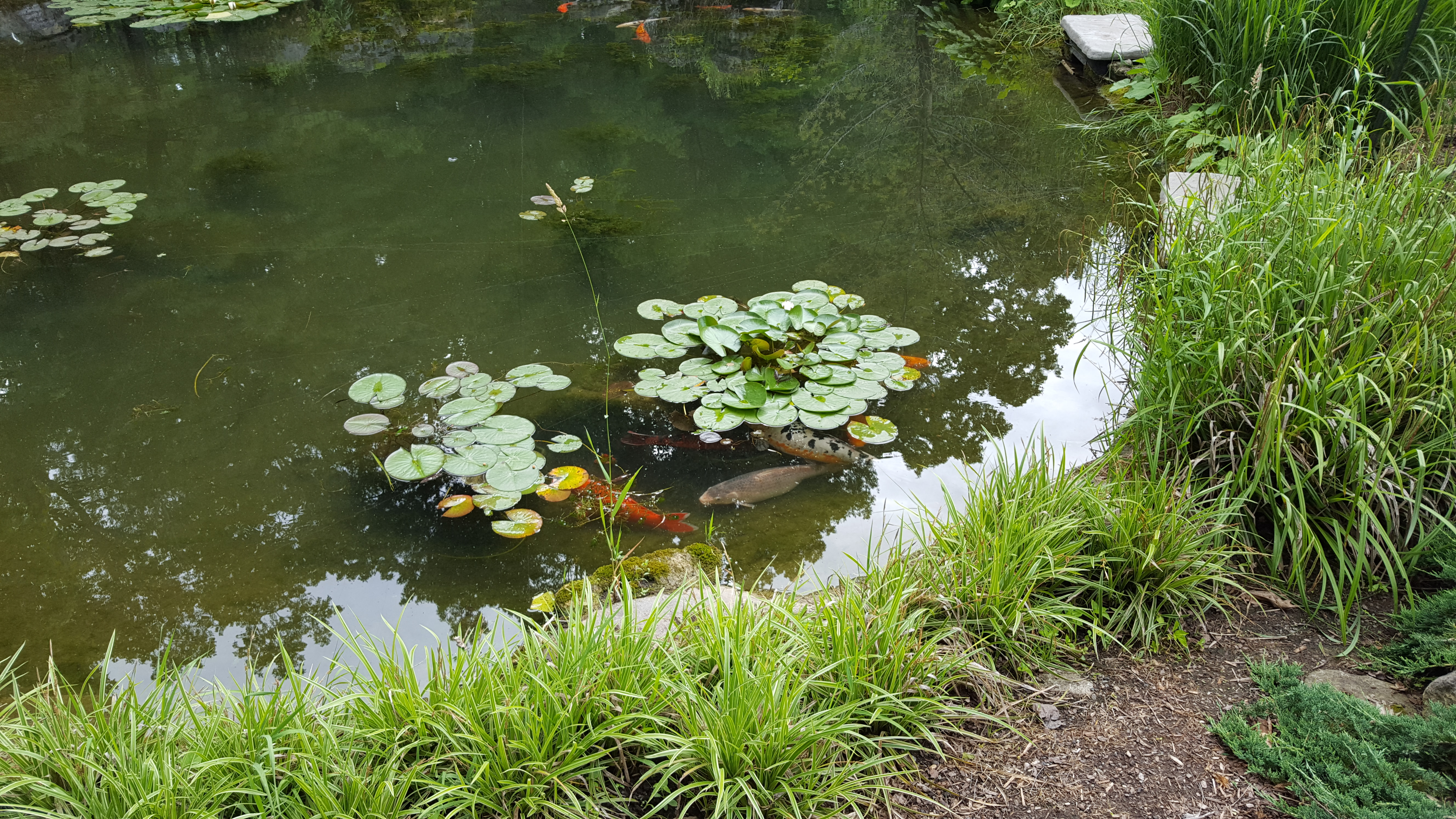 Rock Water Plant Pond Maintenance