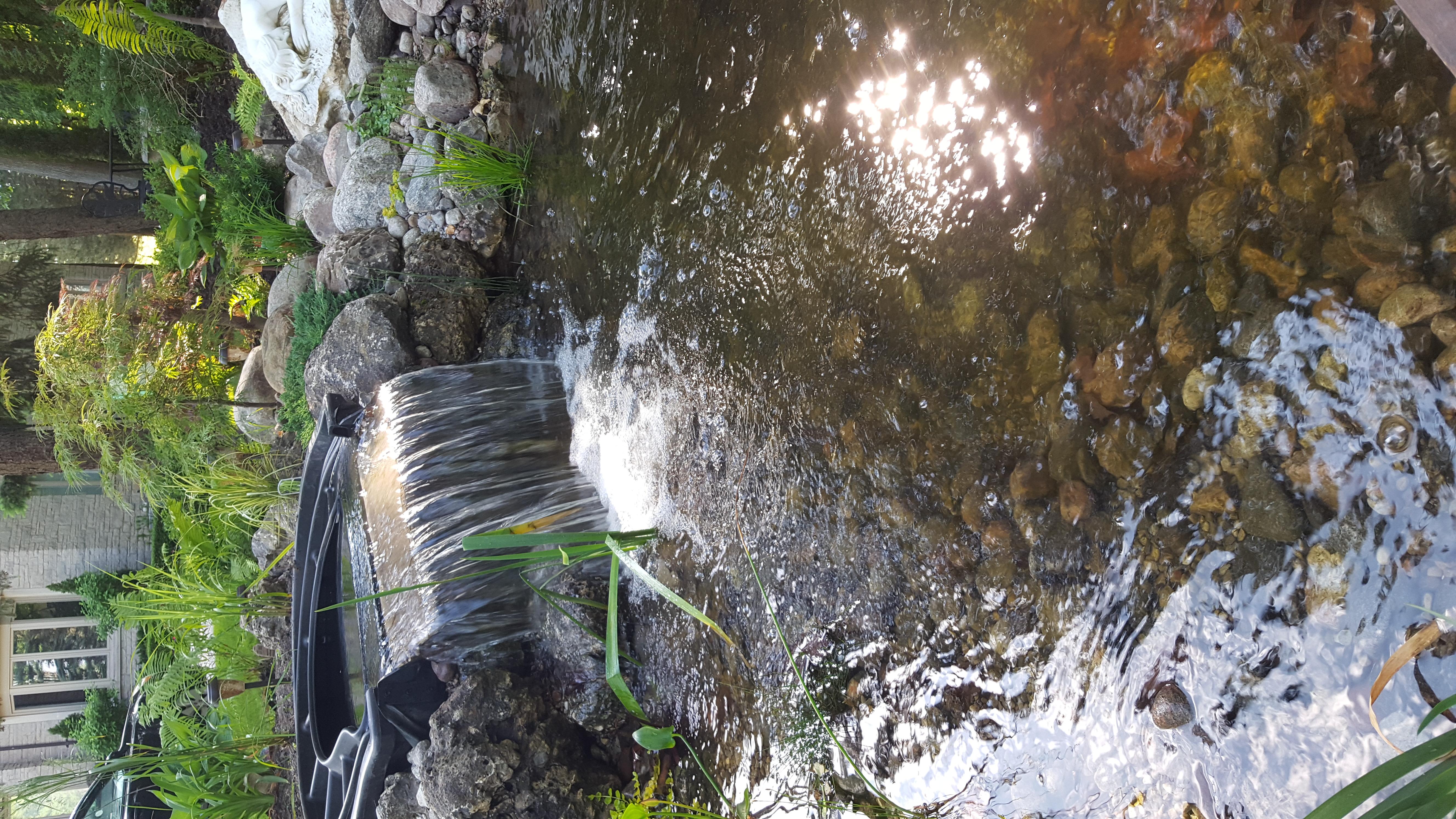 Bog pond - Biofalls filter