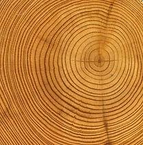 Anelli di legno