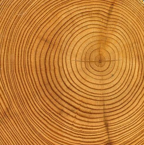 Anneaux en bois