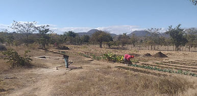 HER ZIMB Farm Project Pict 2 - 2020-07-2