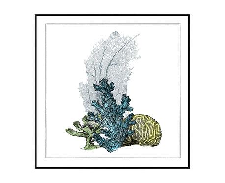 Coral Beauty II