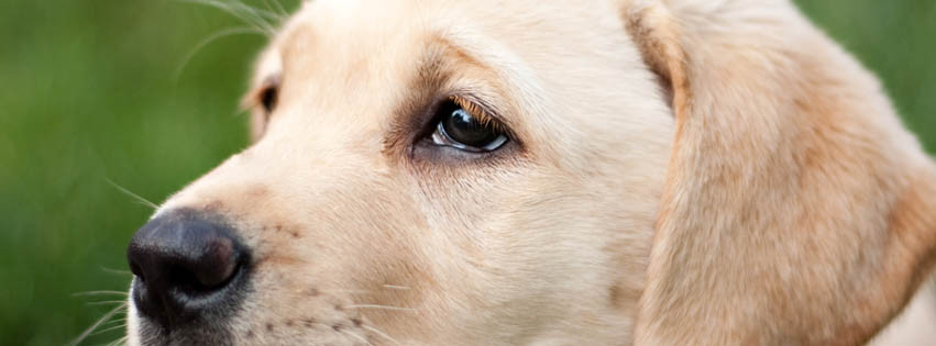 Simon Falk Eyecare sponsors a hearing dog and guide dog