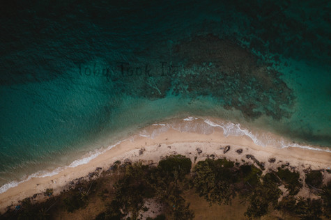 The Sandy Shore