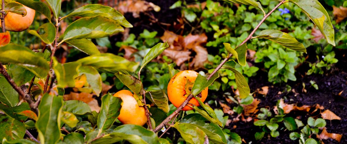 Edible Landscaping & Home Gardens