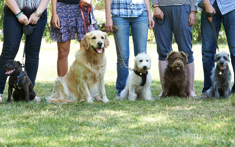 Do you really need a Dog Trainer?