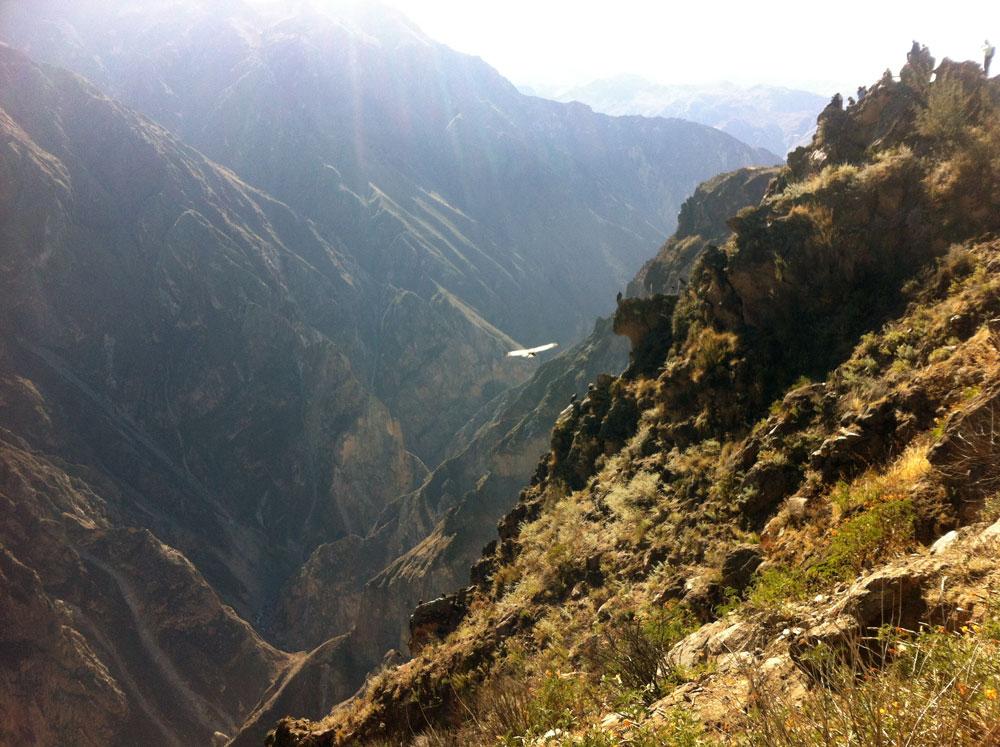 Condor i Colca Canyon