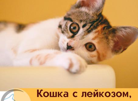 Дело о вирусной лейкемии кошек..