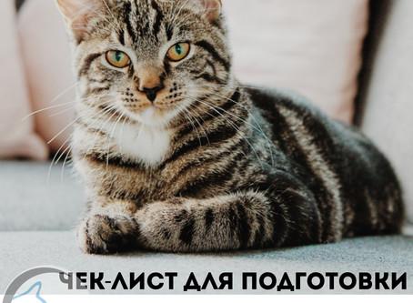 🐱Хочу записать кота/кошку на кастрацию