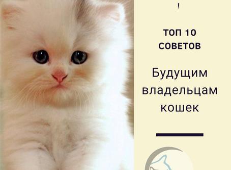 10 советов будущим владельцам кошек