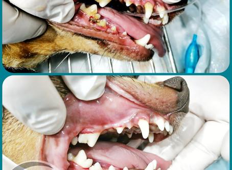 Порядок с зубами-порядок во всем организме.