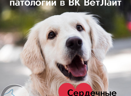Диагностика болезней сердца у собак и кошек в ВК ВетЛайт