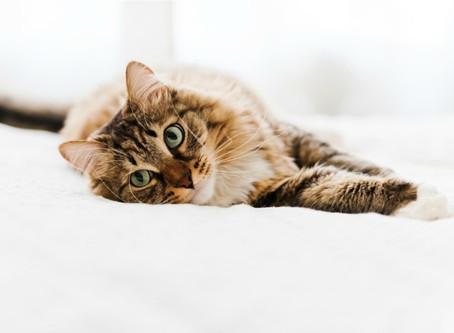 Дело об эпилепсии и судорогах у кошек в целом