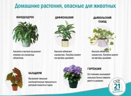 Какие растения опасны для кошек?
