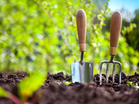 Lawn & Garden Tips That Will Make Your Home Blossom