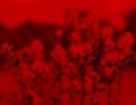 Indian_Paintbrush_in_Grand_Teton_NP-NPS_