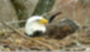 Screen Shot 2020-03-26 at 12.41.53 PM.pn